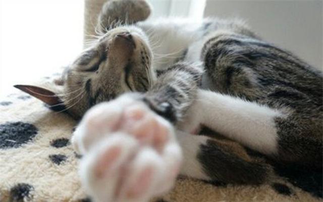 楼间小屋里的爱猫时光