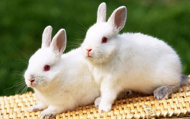 第三十二届中国兔业大会