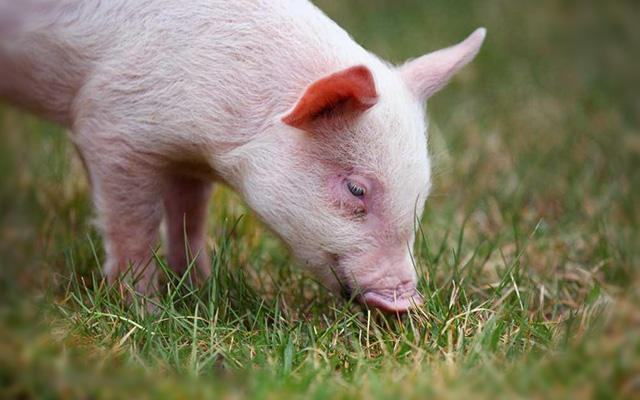 2015年安徽省猪业大会暨年度会员大会