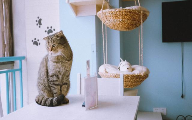 日系ZAKKA,猫奴的天堂