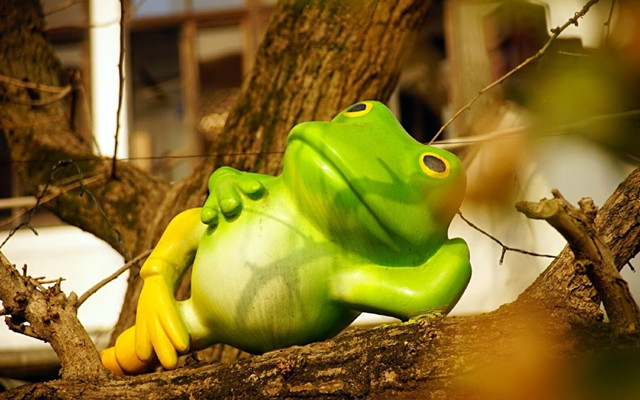 这里的青蛙不冬眠