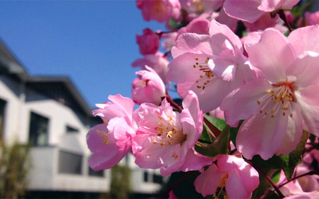 花木繁盛之美
