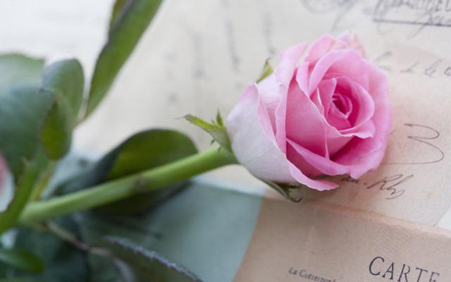 只爱玫瑰,只在这里