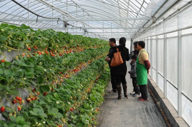 2019全国精品水果提质增产增效技术系列培训 ——葡萄、草莓、无花果种植关键技术专题培训班(9月北京)