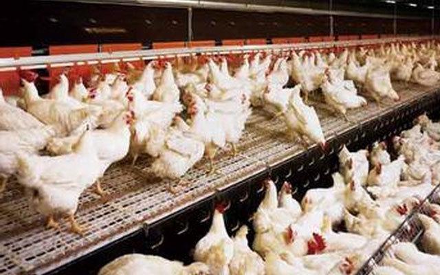 首届(2015)山东肉鸡产业发展大会