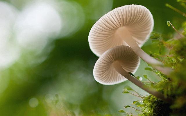 第九届中国蘑菇节会议