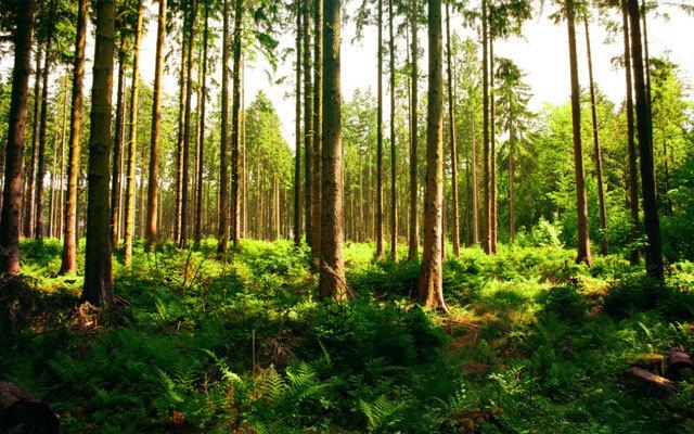 中国林业经济学会森林资源与环境经济专业委员会2015年学术会议