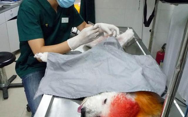 2015江苏省宠物诊疗行业协会年会暨苏州市动物诊疗协会年会
