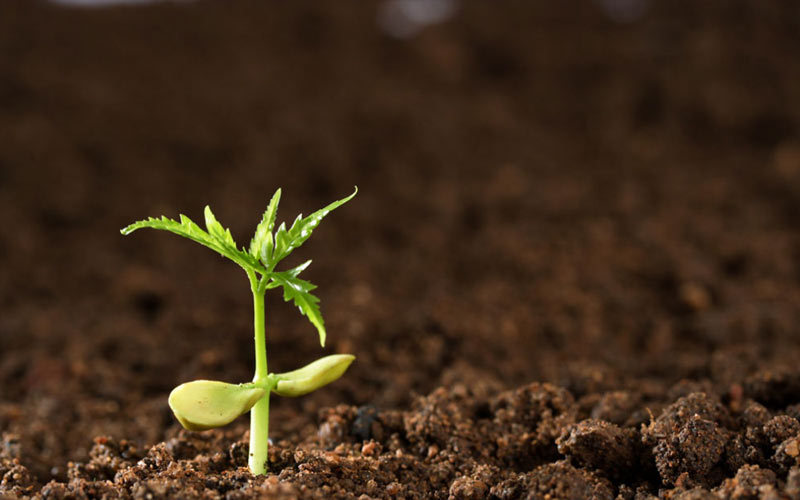 2015土壤可持续发展论坛