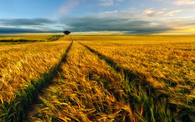 废除农业税后的农业与农村发展研讨会