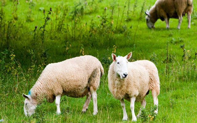 2015年中国(郑州)首届羊业发展高峰论坛