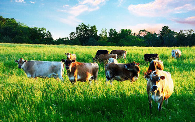甘肃省高产优质牧草生产技术国际研讨会
