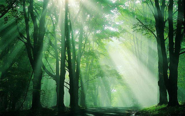 第四届森林科学论坛——森林多功能经营与管理国际学术研讨会