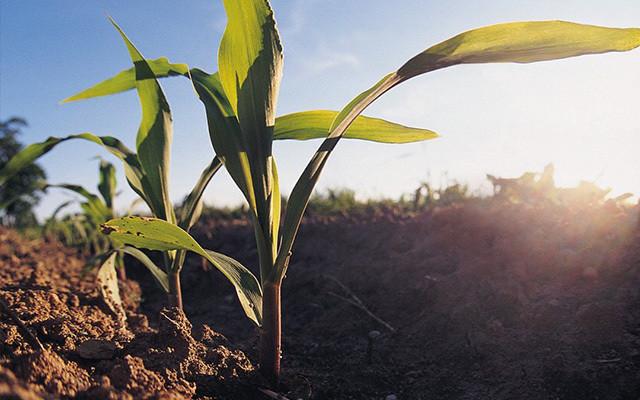 2015年有机种植农场培训及研讨会