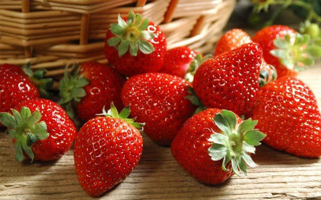 第一届河南省草莓产业发展研讨会