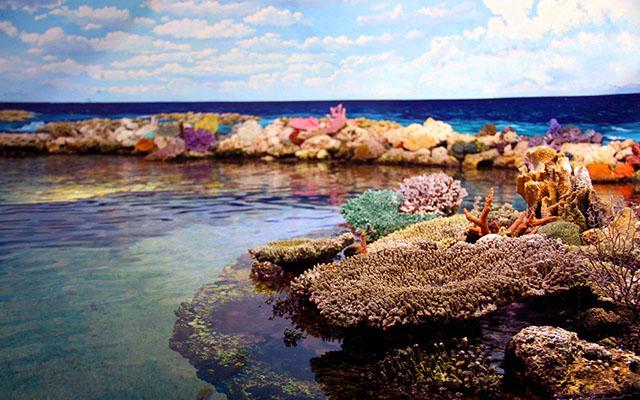 生态系统服务与岛礁保护修复研讨会