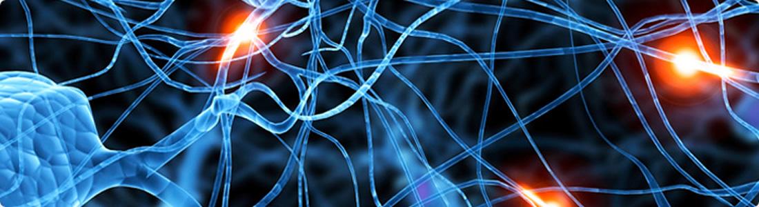 2016心理学,神经科学与行为国际会议