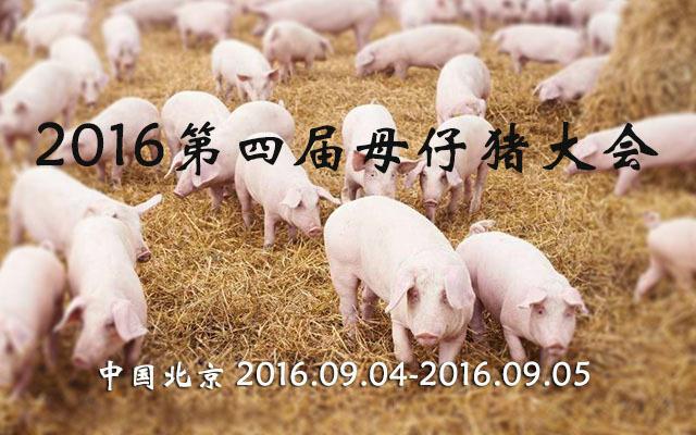 2016第四届母仔猪大会