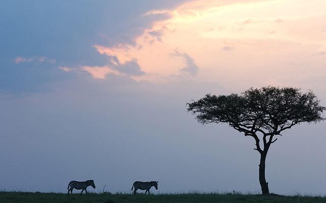 非洲肯尼亚