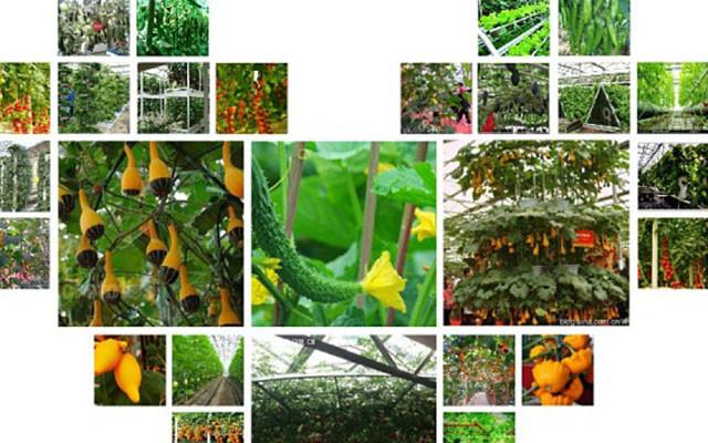 第九期荷兰无土栽培技术的升级与有机蔬菜活体保鲜技术培训班